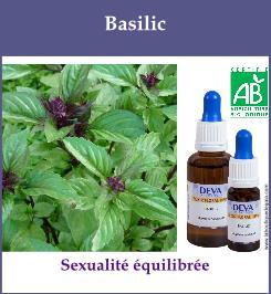 Basilic 1