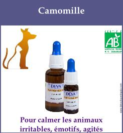Camomille animaux