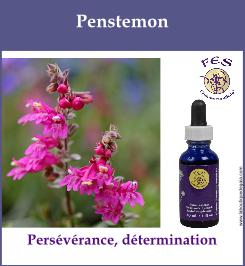 Penstemon