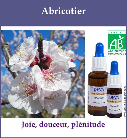Abricotier 2