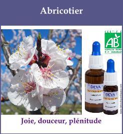 Abricotier 1