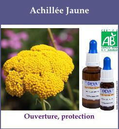 elixir floral achillee jaune