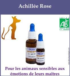 Achillee rose animaux