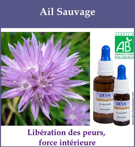 Ail sauvage 2
