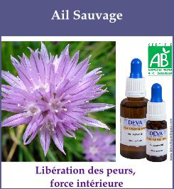 elixir floral ail sauvage