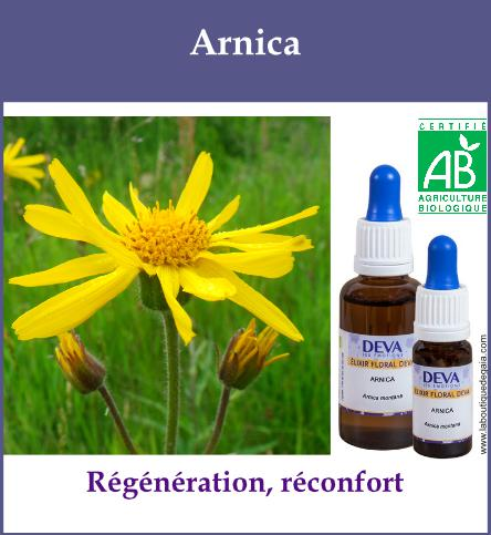 Arnica 2