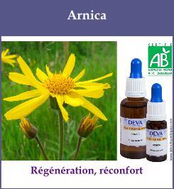elixir floral arnica