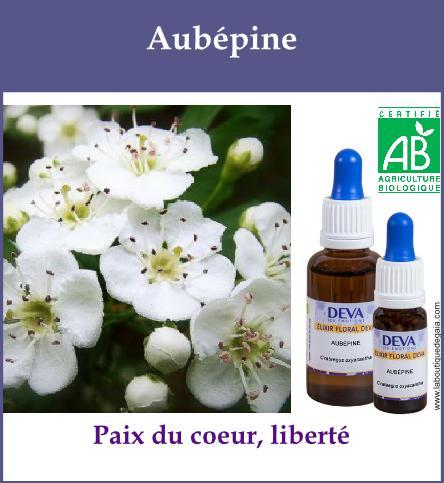 Aubepine 2