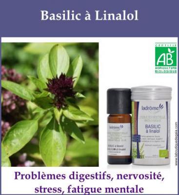 Basilic à linalol