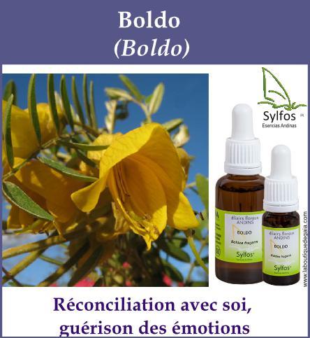 Boldo 5