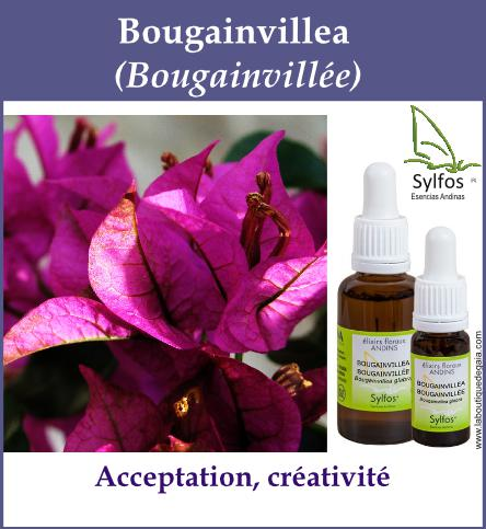 Bougainvillea 5