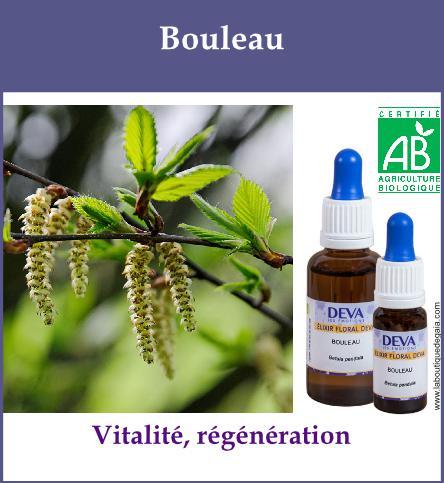 Bouleau 2