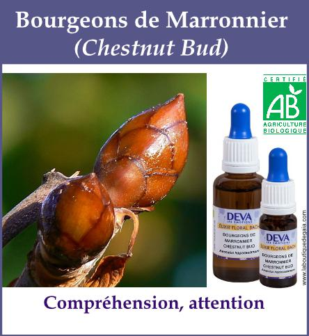 Bourgeon marronier 4