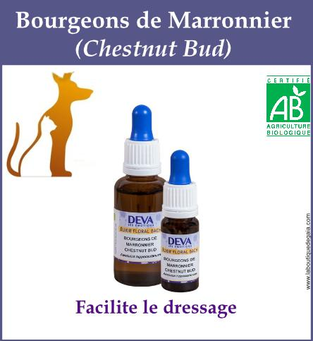 Bourgeon marronier animaux