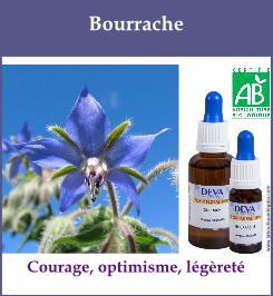 elixir floral bourrache