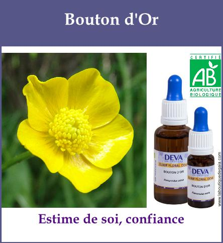 Bouton d or 2