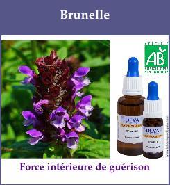 elixir floral brunelle