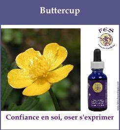 elixir californien buttercup