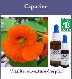 elixir floral capucine