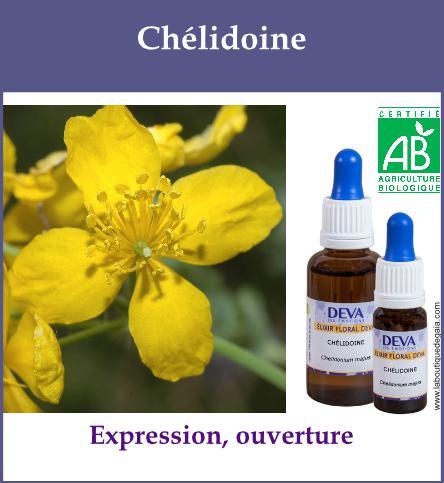 Chelidoine 2