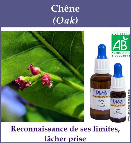 elixir floral chene