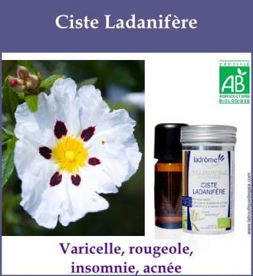 Ciste Ladanifère