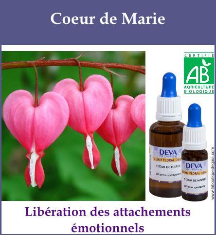 elixir floral coeur de marie