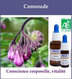 elixir floral consoude