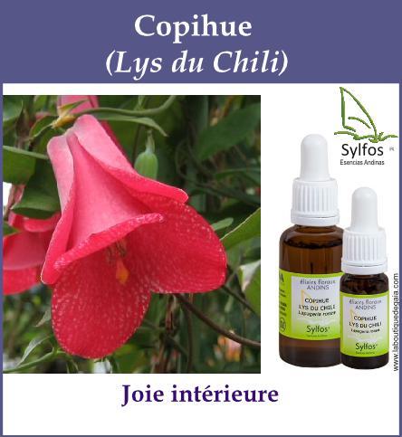 Copihue 6
