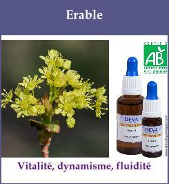 elixir floral erable
