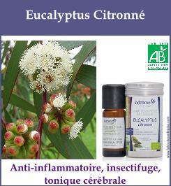 HE eucalyptus citronne