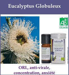 HE eucalyptus globuleux