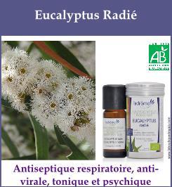 HE eucalyptus radie