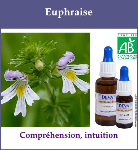Euphraise 2