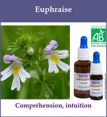 Euphraise