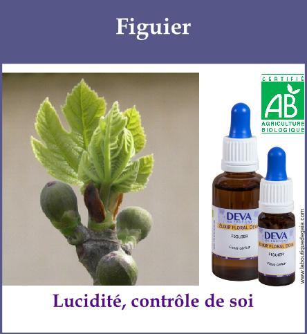 elixir floral figuier