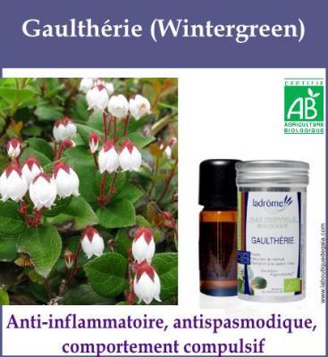 Gaulthérie (Wintergreen)