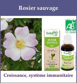 gemmo rosier sauvage