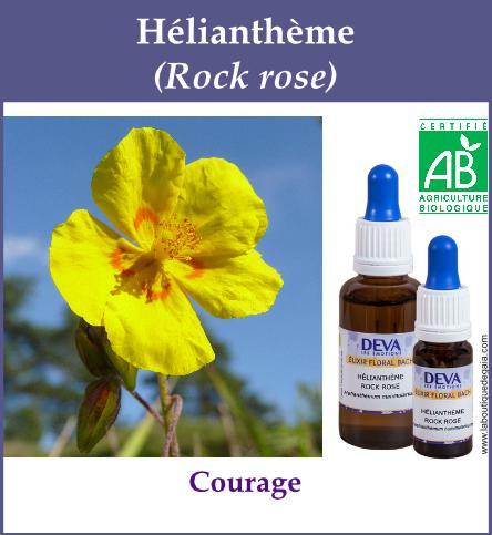 Heliantheme 4