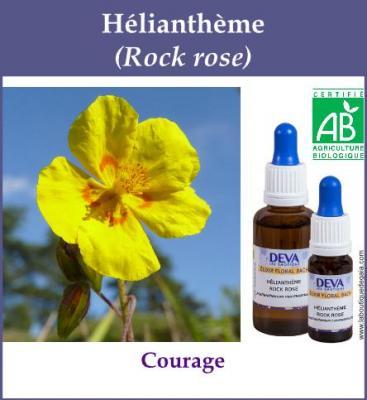 Hélianthème