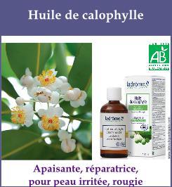 huile calophylle