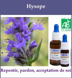 Hysope 1