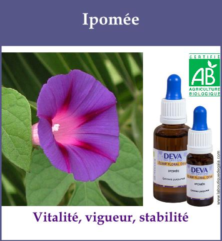 Ipomee 2