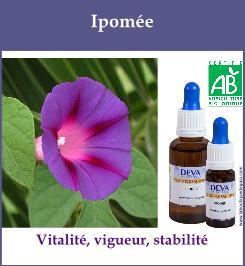 elixir floral ipomee