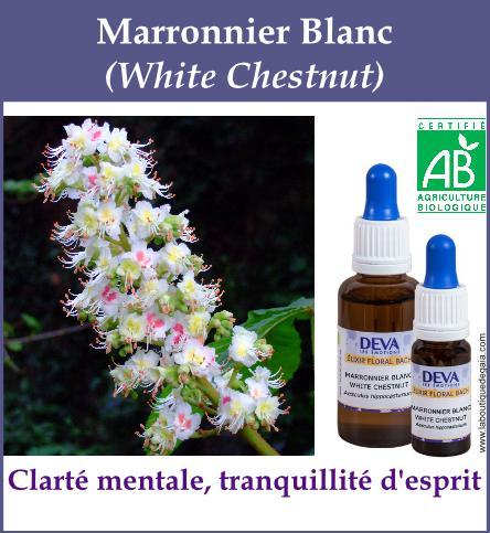 elixir floral marronnier blanc
