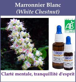 fleur bach marronnier blanc