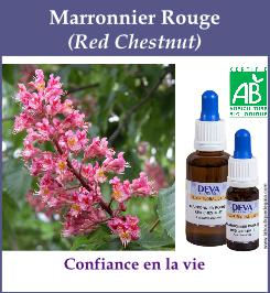 elixir floral marronnier rouge