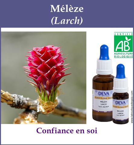 Meleze 4