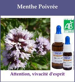 elixir floral menthe poivree