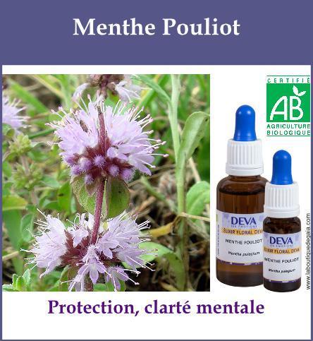 Menthe Pouliot